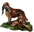 Irish setter hunting dog with a duck in its mouth Royalty Free Stock Photos