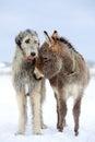 Dog and donkey Royalty Free Stock Photo