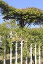 Iron fence Royalty Free Stock Photo