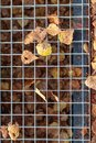 Grate of a drain with yellow and orange leaves fallen from trees on an autumn warm day after rain during fall foliage Royalty Free Stock Photo