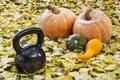 Iron kettlebell and pumpkin Royalty Free Stock Photo