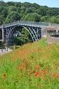 Ironbridge Poppies Royalty Free Stock Photo