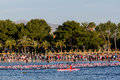 Ironman swim in Alcudia Royalty Free Stock Photo