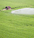 Irrigated field Stock Images