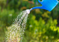 Irrigating with sprinkling can Royalty Free Stock Photo