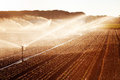 Irrigation in corn field of growing backlighting effect valladolid spain Stock Image