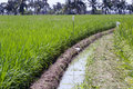 Irrigation ditch of rice field in thailand Stock Images