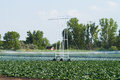 Irrigation pivot watering on vegetable field Stock Photography