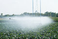 Irrigation pivot watering on vegetable field Royalty Free Stock Image