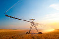 Irrigation pivot on the wheat field Royalty Free Stock Photography