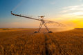 Irrigation pivot wheat field summer sunrise Royalty Free Stock Photos