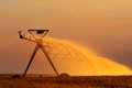 Irrigation pivot on the wheat field at sunset Royalty Free Stock Photography