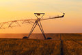 Irrigation pivot on the wheat field at sunset Stock Images