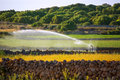 Irrigation spring on cereal fields in menorca balearic islands Stock Photography