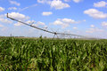 Irrigation system for agriculture an in a grain field Stock Image
