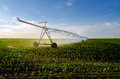 Irrigation system watering corn field on sunny summer day Royalty Free Stock Photo