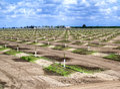 Irrigation on a tree farm in california Royalty Free Stock Photos
