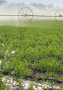 Irrigation of vegetables sprinklers on wheel lines watering Stock Images