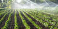 Irrigation of vegetables system on green field Royalty Free Stock Photos