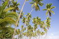 Island Coconut Trees Royalty Free Stock Photography