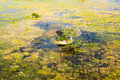 Island in the Okavango Delta seen from a heli Royalty Free Stock Photos