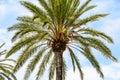 Island Palm Tree On Blue Sky Royalty Free Stock Photo