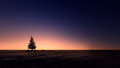 Island in sunset beach silhouette christmas tree the with Stock Photography