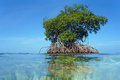 Islet of mangrove with blue sky view from water surface an in background bocas del toro caribbean sea panama Stock Photos