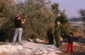 stock image of  ISM volunteers and Palestinian workers in an olive grove, Palestine.