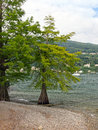 Isola bella some trees on the on the lago maggiore Stock Photos