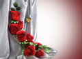 Isolate holiday background with roses Stock Images