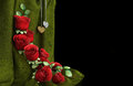 Isolate holiday background with roses Stock Photo