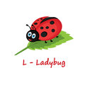 Isolated animal alphabet for the kids,L for Ladybug