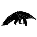 Isolated anteater silhouette