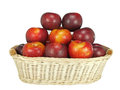 Isolated basket of fresh and crunchy victorian plums Stock Image