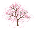 Isolated beautiful cherry blossom tree