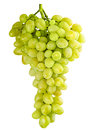 Isolated bunch of grapes Royalty Free Stock Photography