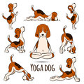 Isolated cartoon funny dog beagle doing yoga position