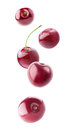 Isolated cherries flying in the air
