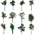 Isolated collection of trees. Royalty Free Stock Photo