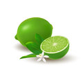 Isolated colored group of lime, half and whole juicy fruit with green leaves, white flower and shadow on white background. Realist