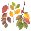 Isolated colorful tree leaves Stock Image