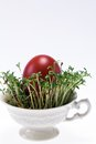 Isolated cress in small cup with easter egg on white background - closeup Royalty Free Stock Images