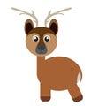 Isolated cute deer