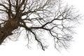Muerto árbol