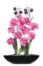 Isolated decorative orchid pink flower in a small pot this is for decoration purposes they are artificial and fake flowers Royalty Free Stock Photos
