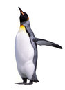 Isolated emperor penguin over white Royalty Free Stock Images