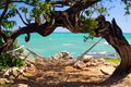 empty Hammock under twisted arched crooked tree with turquoise rough ocean, Jamaica