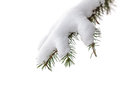 Isolated evergreen pine tree branch with snow Royalty Free Stock Photo