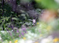 Isolated fearful chamois in the middle of the forest scary Stock Photos